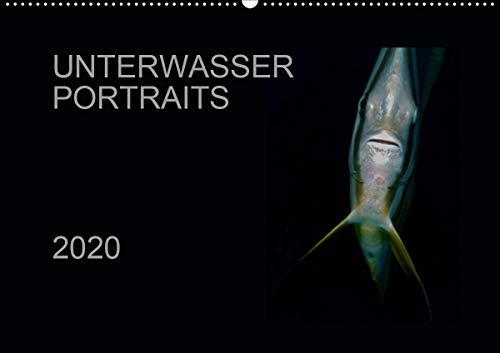 Unterwasser Portraits (Wandkalender 2020 DIN A2 quer)