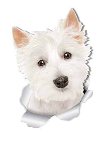 Winston & Bear Cute Westie Dog Wall Decals - 2 Pack - West Highland White Terrier 3D Sticker Decals for Walls, Cars, Toilet and More - Retail Packaged Westie Gifts