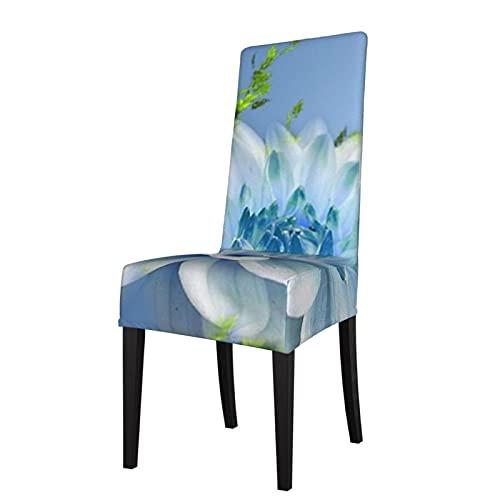 Butterfly Wallpapers Fondos de escritorio Desmontable silla de comedor cubierta cubierta de asiento es adecuado para banquete de ceremonia de hotel