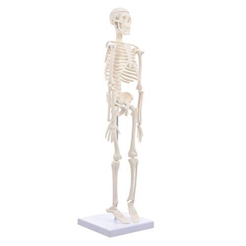 ULTECHNOVO 45 Cm Modelo de Esqueleto Humano Anatómico Hueso de Cuerpo Completo Modelo de Enseñanza Médica Modelo de Esqueleto de Plástico para Educación Médica