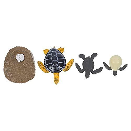 YARNOW Tortuga de Mar Océano Animal Marino Crecimiento Ciclo de Vida Modelo Figura Pastel Toppers Aprendizaje Juguetes Educativos Accesorios de Salón Suministros de Fiesta para Niños