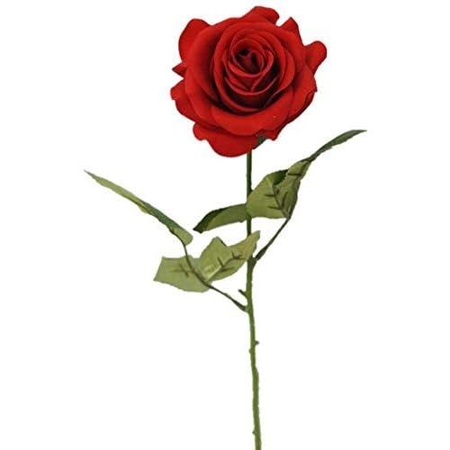 Single Flower: Amazon.com