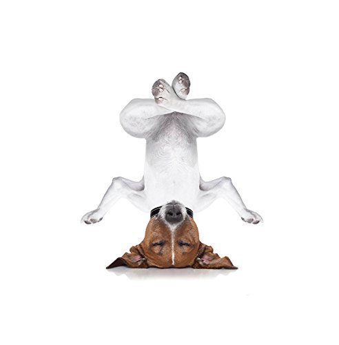 Kisscase Custom Blanket Yoga Animal Funny Dog Upside Down Relaxing with Closed Eyes and Doing Yoga Calm Therapy Humor Print Bedroom Living Room Dorm Art White Brown
