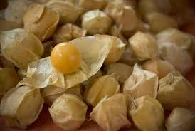 Pinky's Seed Company - Aunt Molly's Ground Cherry Seeds-100+