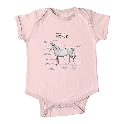 Anatomía de un caballo bebé de una pieza