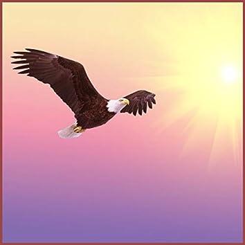 Wind Beneath My Wings (Acoustic Guitar instrumental )