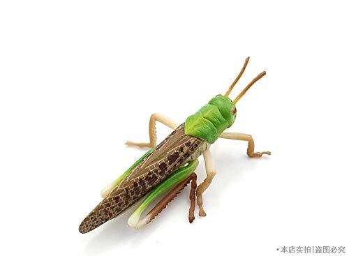 FamilyKelpe Deko Skulpturen Statue Figur Simulationsmodell Dekorative Insekten Insekten Serie Blattläuse