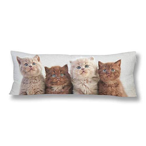 CiCiDi Seitenschläferkissen Kissen-Bezug 40x145 cm britische Kätzchen Atmungsaktives Kissenhüllen mit Reißverschluss Baumwollen und Polyester
