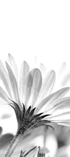 Bilderdepot24 Türtapete selbstklebend | Blumenbild - Margerite | in 90x200 cm | einteilig Türaufkleber Türfolie Türposter | Wand-deko Dekoration Wohnung | TF60206
