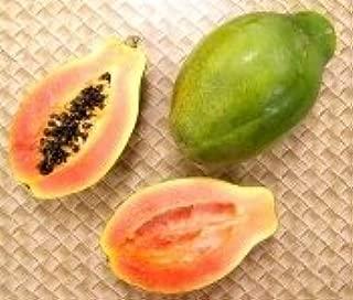 Taiwan Solo Sunrise Papaya Seeds 10 Seed Pack by OrganicSeedSupply