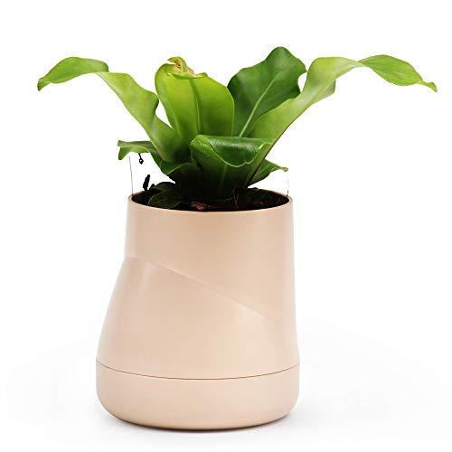 Qualy Hill Pot de fleurs Pot de fleurs, ressemble à Little Hill, avec système d'arrosage automatique, H : 10 cm, Ø 13 cm