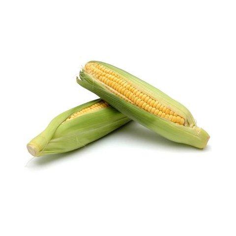 Les Graines Bocquet - Graines De Maïs Doux Sucré Golden Bontam - Graines Potagères À Semer - Sachet De 10Grammes