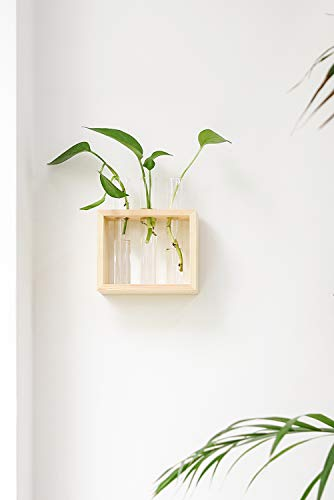 Mkono Wall Hanging Glass Planter Propagation Station Modern Flower Bud Vase in Wood Stand Rack Tabletop Terrarium for… 2 Great propagators: Prefect for propagations and cuttings! Propagates your plant's babies in style, slim glass container provides plenty of room for plant's roots and all are visible for observing its growth condition. Minimalistic Look: A wood rack in Natural Retro Color combined with 3 clear glass tubes. A beautiful way to display the artificial or freshly cut flowers, mixed bouquets and water rooted plants for home decor in livingroom, bedroom, restroom, dinning room, kitchen, or office. Functional Item: Simple look is suitable for most of plants, likes Scindapsus, Pothos vine, African violets, Lucky Bamboo, even for Herbs. Wall mountable or desktop stand for different ways of showing. Make a great gift for the plant-lover in your life.
