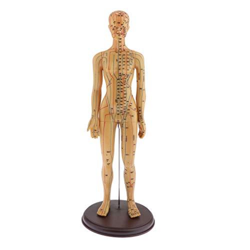 T TOOYFUL Akupunktur-Figur, Männlich / Weiblich Menschliche Ganzkörper Akupunktur und Meridiane Anatomie Lernmodell - Weiblich, Hart