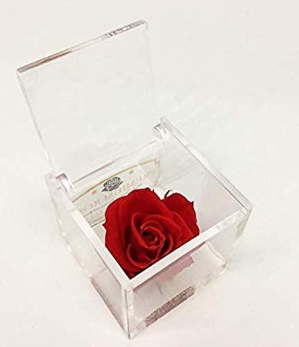 A 1050 Cubo Rosa Stabilizzata Rossa 5cm 5x5x5 profumata, Il Cubo con Una Vera e Propria Rosa Che Dura Anche più di 5 Anni, Premium-Rose