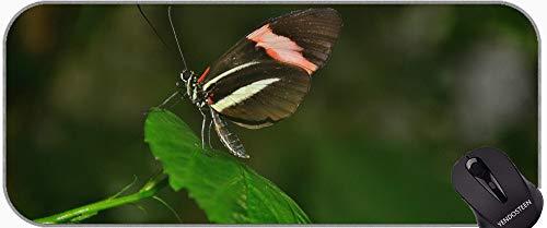 Escritorio Alfombra Mat Mateo Almohadillas de Ratón, Swallowtail Butterfly Zinnia Naturaleza Insecto Natural Gran Colchilla de Juego