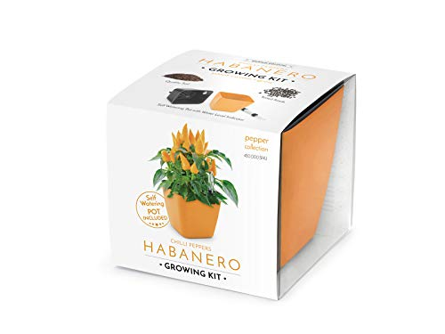 Domestico Habanero Anzuchtset, Chilli pepper Growing Kit (Orange), All-In-One Set – Selbstbewässerungstopf 13x13 cm, Samen, frisches Substrat mit Nährstoffen