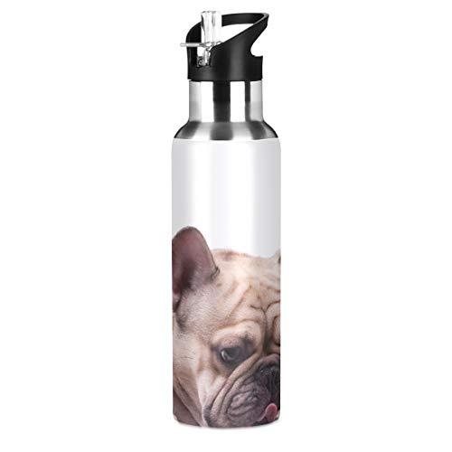 LIANGWE Flasche Edelstahl Entzückende hellbraune französische Bulldogge liegende Wasserflasche Edelstahl Radsport Sport Doppelwandige vakuumisolierte schmale Mundwasserflasche