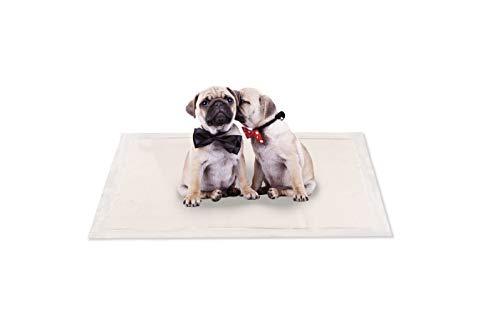 FRESHcare - Alfombra educativa, ultra absorbente y resistente para cachorros, 50 unidades + 5 unidades de 56 x 56 cm