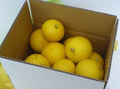 有機肥料で育てた土佐の小夏 3kg×1箱 家庭用 青山農園 日向夏 サマーオレンジ スッキリとした味わい