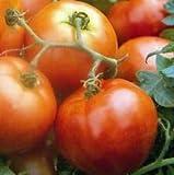 Tomate Ailsa Craig 40 Semillas *P&P gratis*