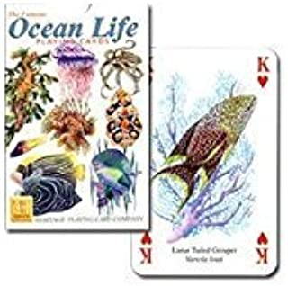 [World of colorful sea] Ocean Life P0040 (japan import)
