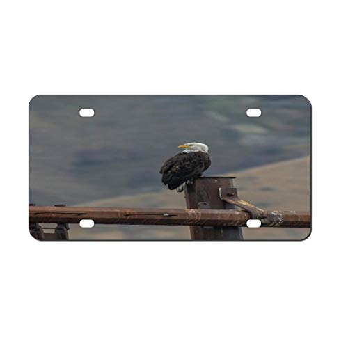 Decorative Car Front License Plate, Bald Eagle Vanity Tag,Metal Car Plate,Aluminum Novelty License Plate,6 X 12 Inch