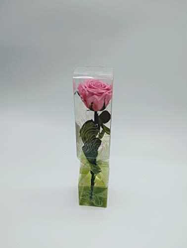 Floréate Rosa eterna preservada Rosa de 25 cm