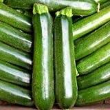 Semi - Vegetale Zucchine F1 Midnight 10 Semi Zucchine
