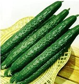 SD0499-0005 Green Japanese Emerald Cucumber Vegetable Seeds, Live Vegetable Seeds, Non-Genetically Modified Seeds (26 Seeds)