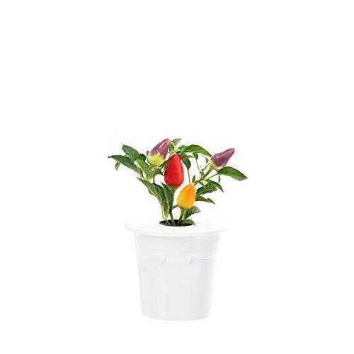 Click & Grow Chilischoten Nachfüllpackung 3er-Pack für deinen smarten Kräutergarten