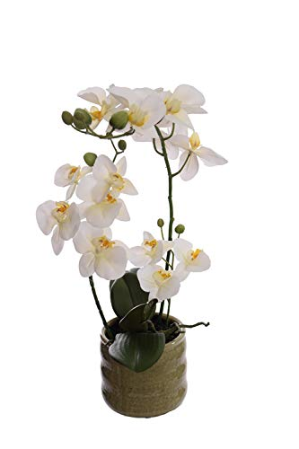 mucplants Orchidee Real Touch 50cm weiß im Keramiktopf Kunstblumen künstliche Orchidee