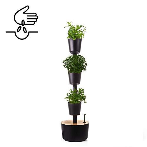 Citysens- Potager d'intérieur avec arrosage auto et graines de plantes aromatiques, noir, 3 pots
