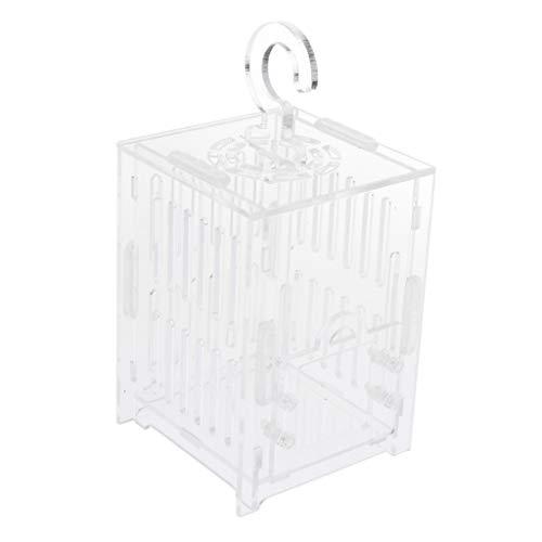 Insecto Casa Nido Jaula Grillo Saltamontes Acrílico Caja Transparente - Claro, S