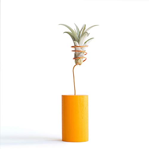 Orange Air Plant Holder, Air Plant Wire Vase, Decorative Modern Planter, Shelf Decoration, Desk Accessory, Best Friend Gifts, Colorful Planters, Small Indoor Planters, Birthday Gifts, Apartment Decor