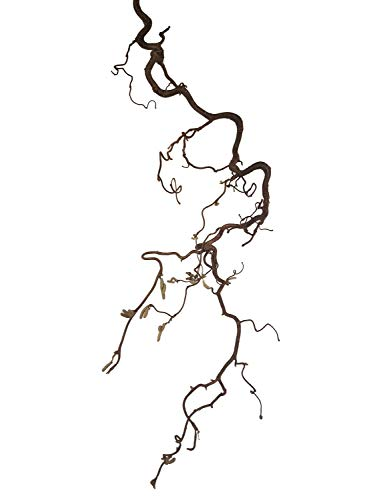 Deko-AST Korkenzieher (ca. 40x30 cm): Korkenzieherzweig - Zweig zum Aufhängen inkl. Schnurr