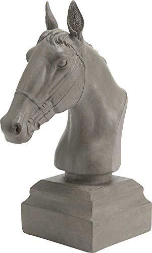 Tête de cheval gris, Amadeus