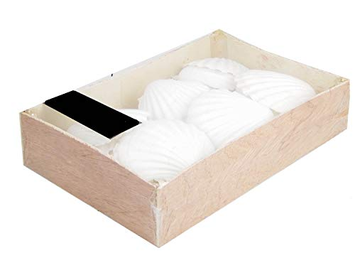 Jakobmuschel/Pilgermuschel/Muschelschale/Weiss ca 10cm / Dekoration/Jacobsmuschel/Fischessen/Maritime Dekoration/Tischdekoration/Auflaufform - Sonderpreis