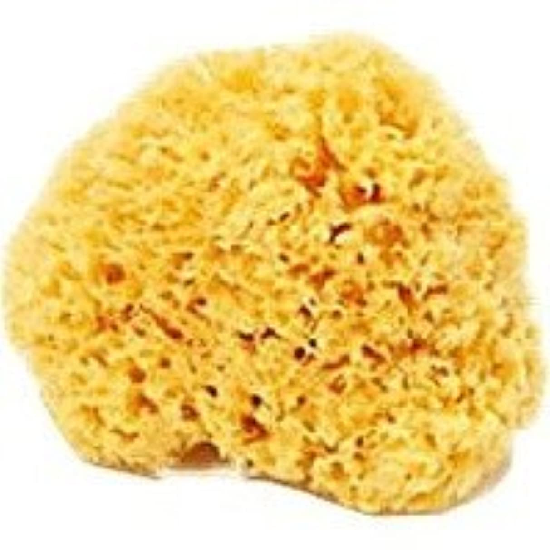 ご飯合理的文天然海綿スポンジ(ハニコム種/全身用LLサイズ16cm)