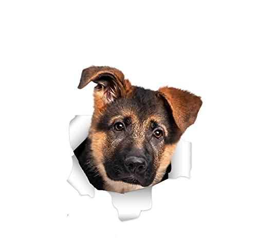 Pegatinas Coche Perro Los Perros De 20 Cm Son Los Amigos Más Leales Del Hombre. Para Los Amantes De Los Perros Y, Por Supuesto, También Hay Pegatinas Impermeables Para Perros Que Cubren Los Arañazos