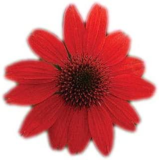 Best echinacea sombrero salsa red seeds Reviews