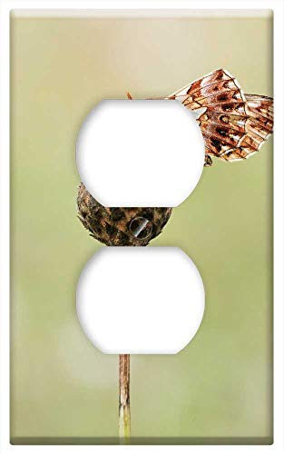 Switch Plate Outlet Cover - Mother Of Pearl Butterfly Butterfly Macro Insect