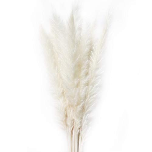 15 piezas de hierba de pampas secas naturales, flores secas para el hogar, decoración, sala de estar, tiro, flores, reed Pampas, suministros de decoración del hogar, blanco, Tamaño libre