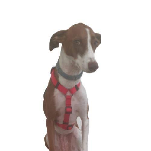 Resppet Arnés para Perro. Arnés para Perro en Forma de H, Color Rojo. (M)