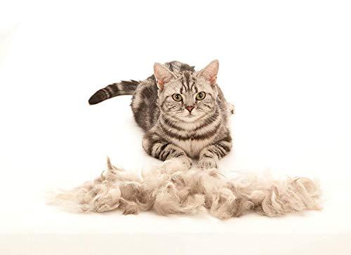 FURminator Fellpflege deShedding-Pflegewerkzeug für kurzhaarige kleine Katzen bis 4,5 kg, Größe S, 1 Tool - 4