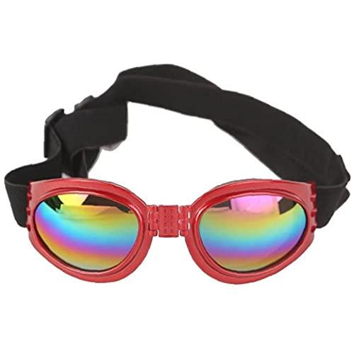 Froiny Occhiali Sole per Occhiali Vista per Occhiali per Occhiali per Occhiali per Occhiali per Occhiali per Cani