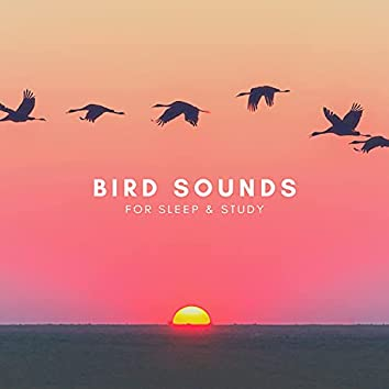 Bird Sounds For Sleep & Study