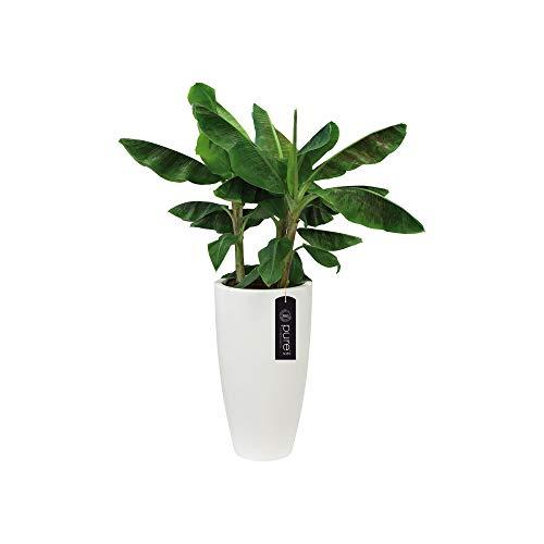 Elho 8885373015000 Pure Soft Round High Flowerpot, 30cm, White