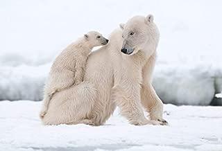 Yeele 5x3ft Polar Bear Backdrop Winter Cold Background for Photography Wildlife Animal Kid Adult Photo Booth Shoot Vinyl Studio Props