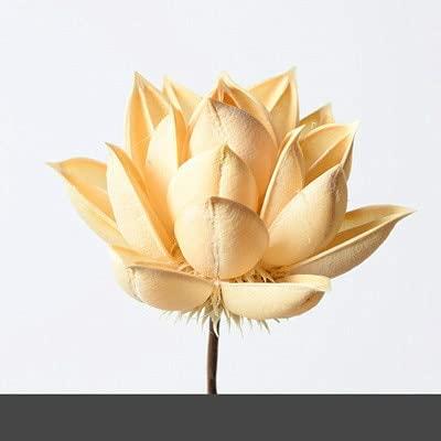 Kaxceay 1pcs Lotus Naturel Coton Bricolage desséquin desséchis Maison décoration Accessoires Accessoires de décoration de Centre de Mariage Flores décor de Mariage Fleur Branche (Color : Lotus Beige)